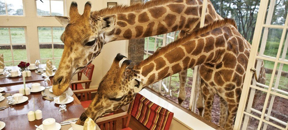 Giraffe Manor in Lang'ata near Nairobi, Kenya