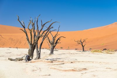 Scenic Sossusvlei and Deadvlei, clay and salt pan with braided Acacia trees surrounded by majestic sand dunes, Namibia
