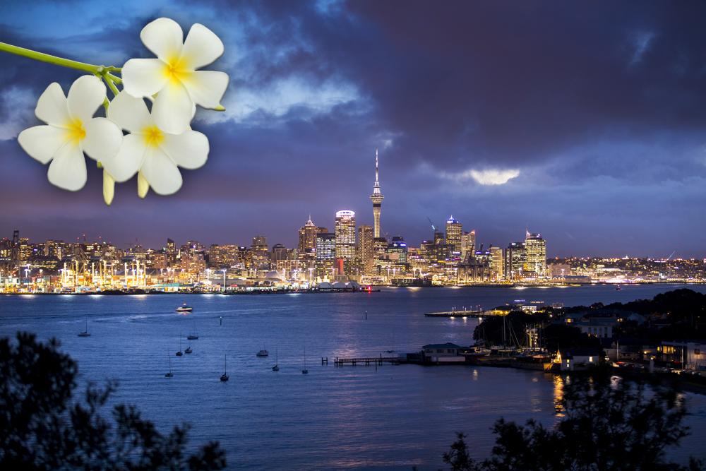 Skyline of Auckland at Night, New Zealand and White Frangipani