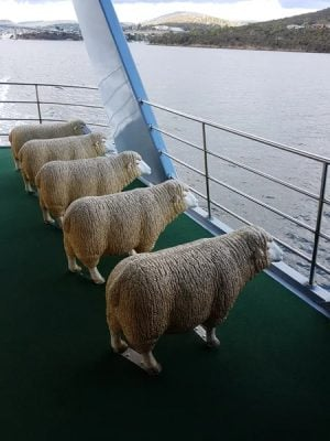 Christian Baines - Pull up a sheep for your ferry ride to MONA, Hobart, Tasmania, Australia
