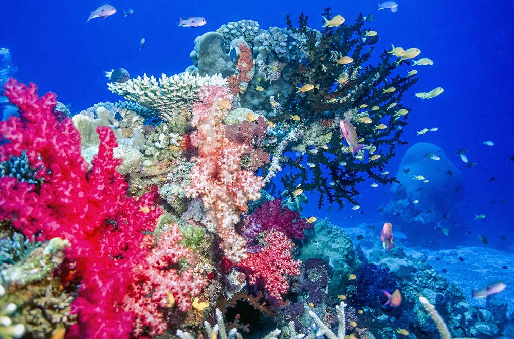 Coral reef off the coast of island of Taveuni, Fiji