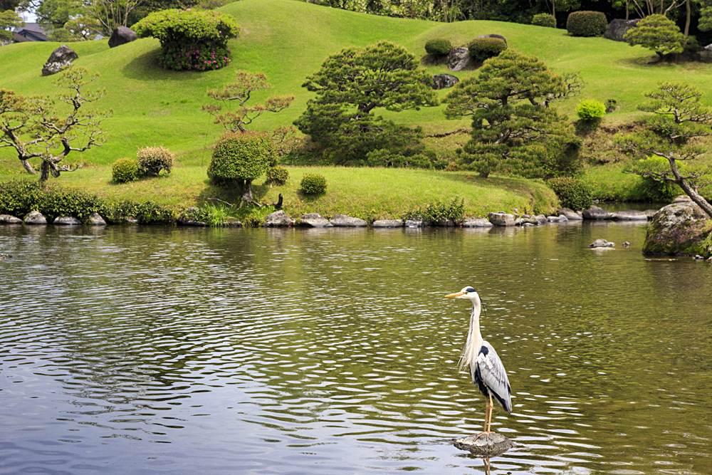 Heron in pond at Suizenji Jojuen Garden, Kumamoto, Kyushu, Japan