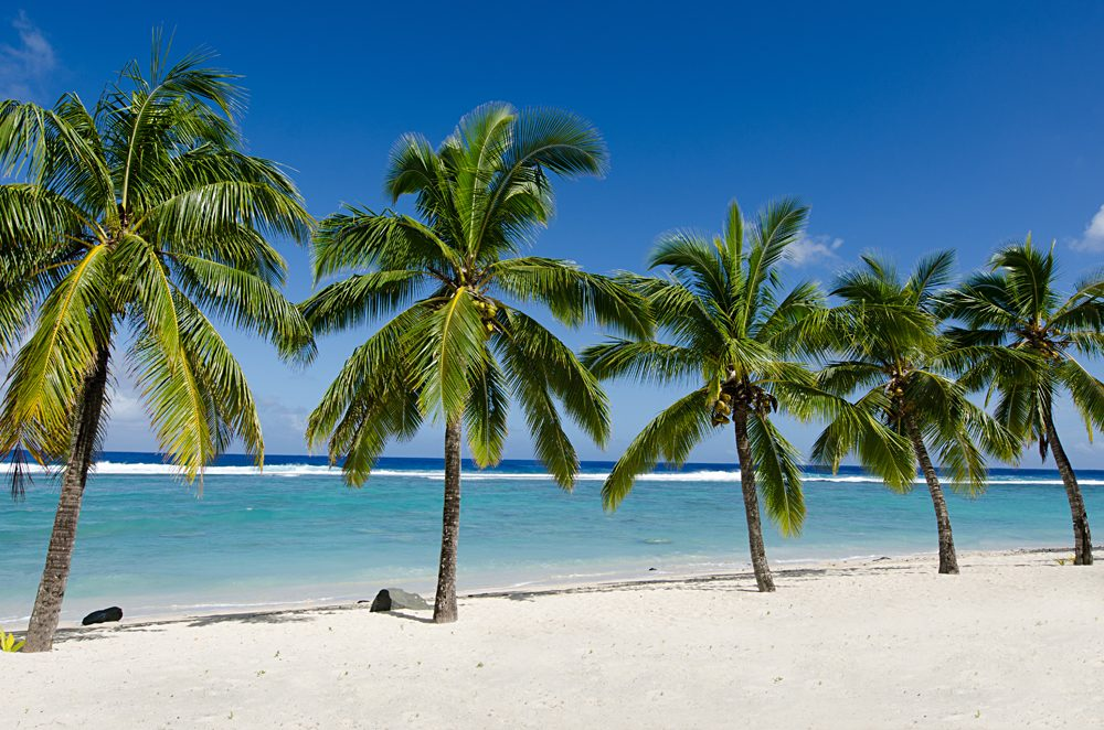 Line of five coconut palm trees at Titikaveka beach in Rarotonga, Cook Islands