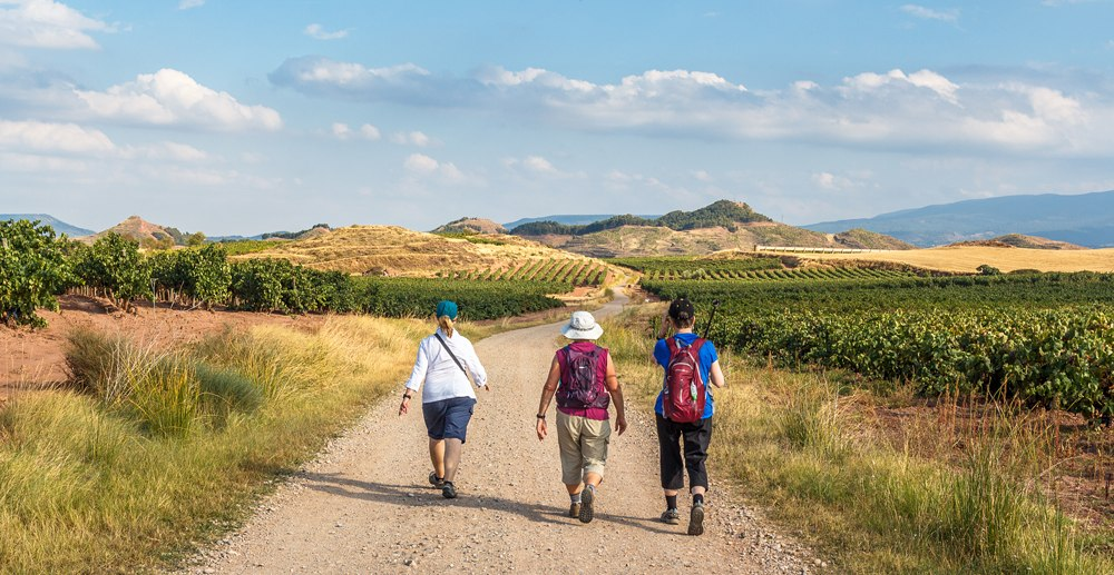 Group of pilgrims walking the Camino de Santiago vinyards in La Rioja region, Spain