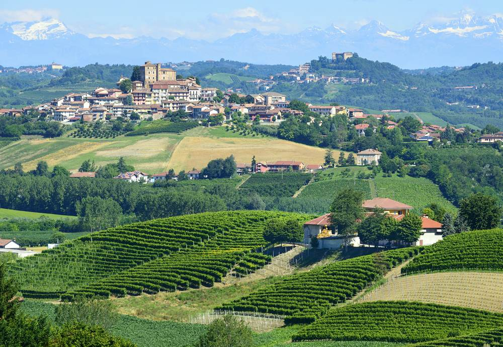 Summer landscape in Langhe with vineyards, Piedmont, Italy