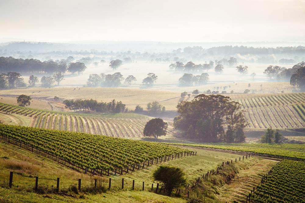 Sunrise over Hunter Valley vineyards, New South Wales, Australia