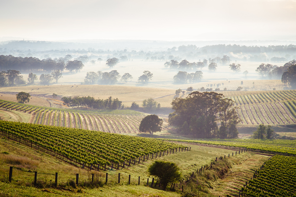 Sunrise over Hunter Valley vineyards, New South Wales, Australia