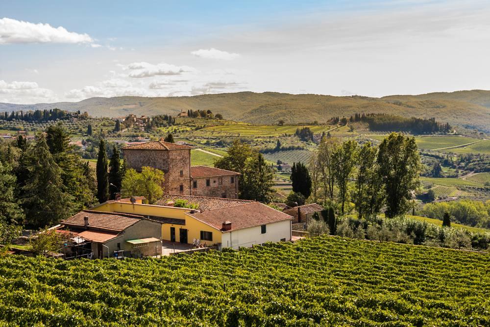 Vineyard in the Chianti region, Tuscany, Italy