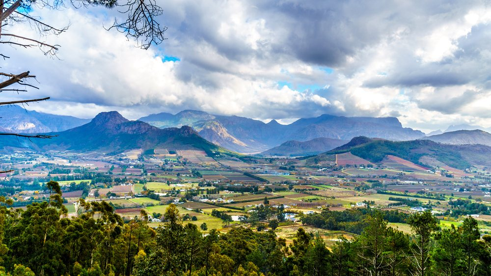 Vineyards in Franschhoek Valley in the Western Cape of South Africa