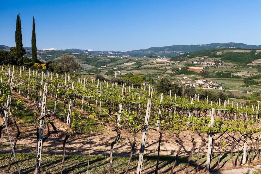 Vineyards in the Valpolicella region, Veneto, Italy