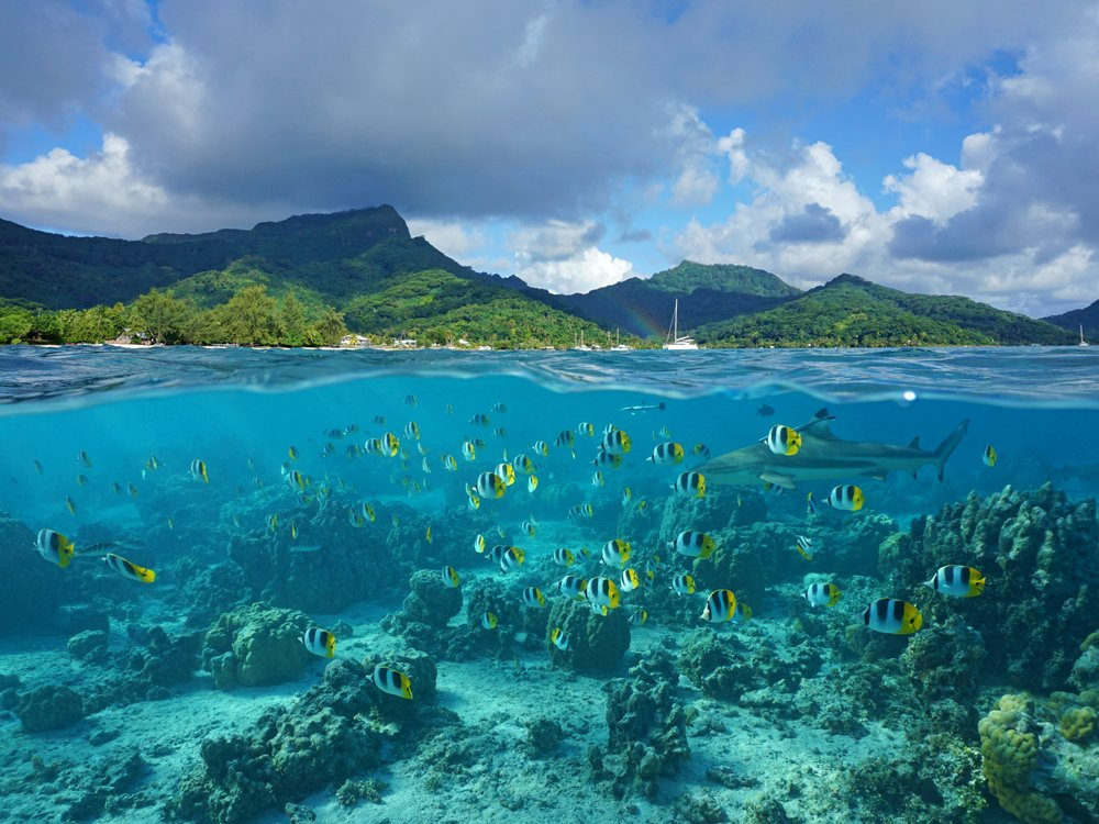 The coast of Huahine island and coral reef fish school with a shark underwater, Tahiti (French Polynesia)