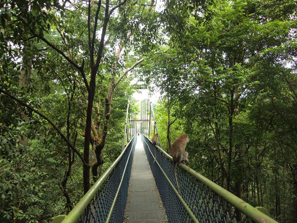 Treetop walk in MacRitchie Reservoir, Singapore