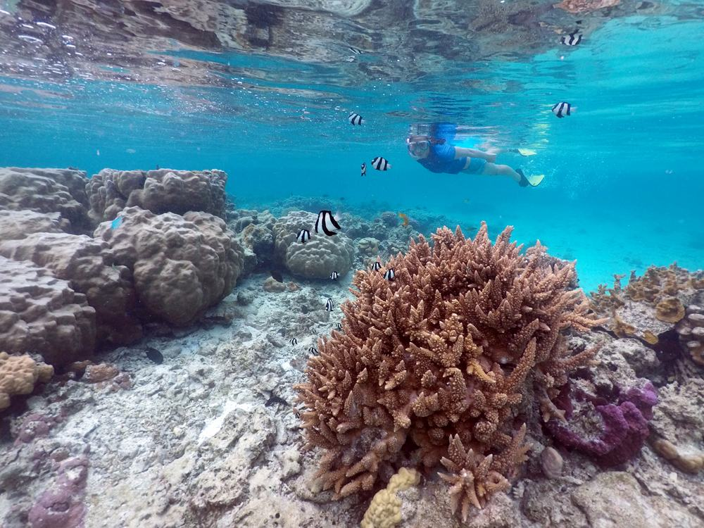 Woman snorkelling above healthy corals with tropical fish in Rarotonga, Cook Islands