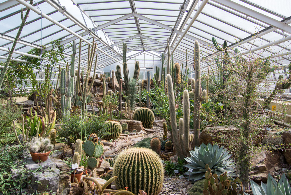 Cacti plants exhibition in Munich Botanical Garden, Munich, Germany