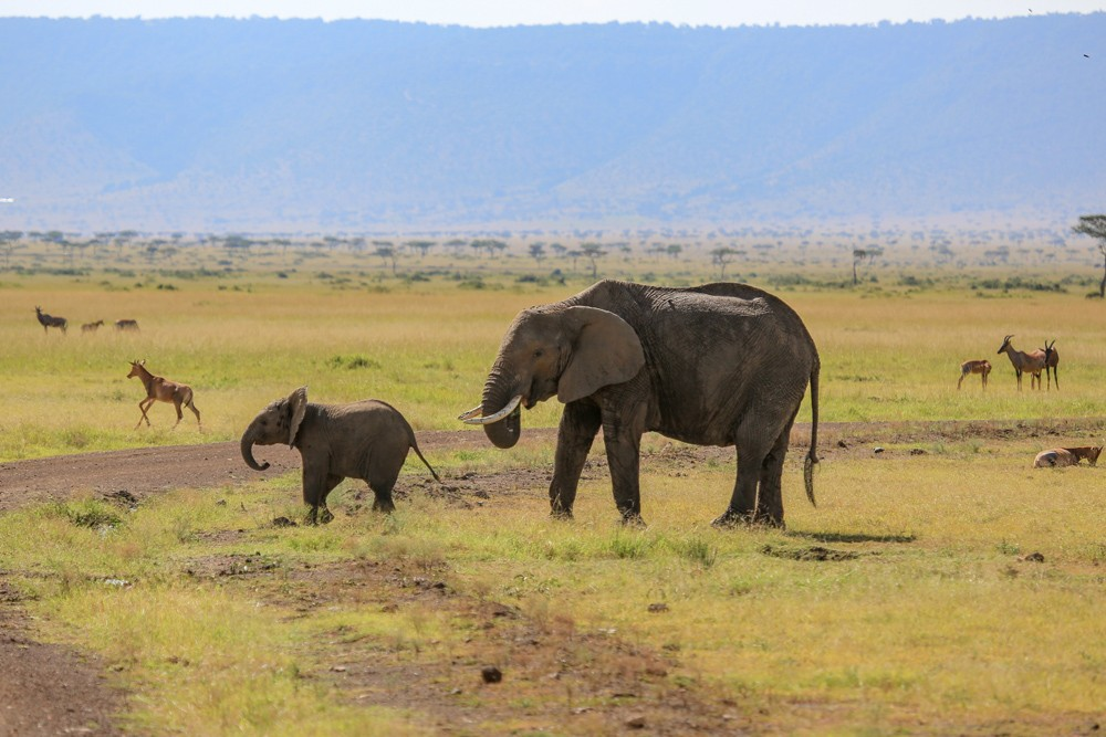 Elephant with baby in Masai Mara, Kenya
