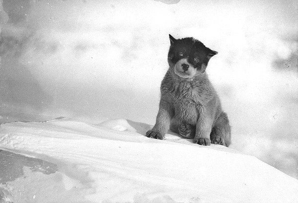 Frank Hurley photo - Blizzard, the Pup in Antarctica, circa 1912
