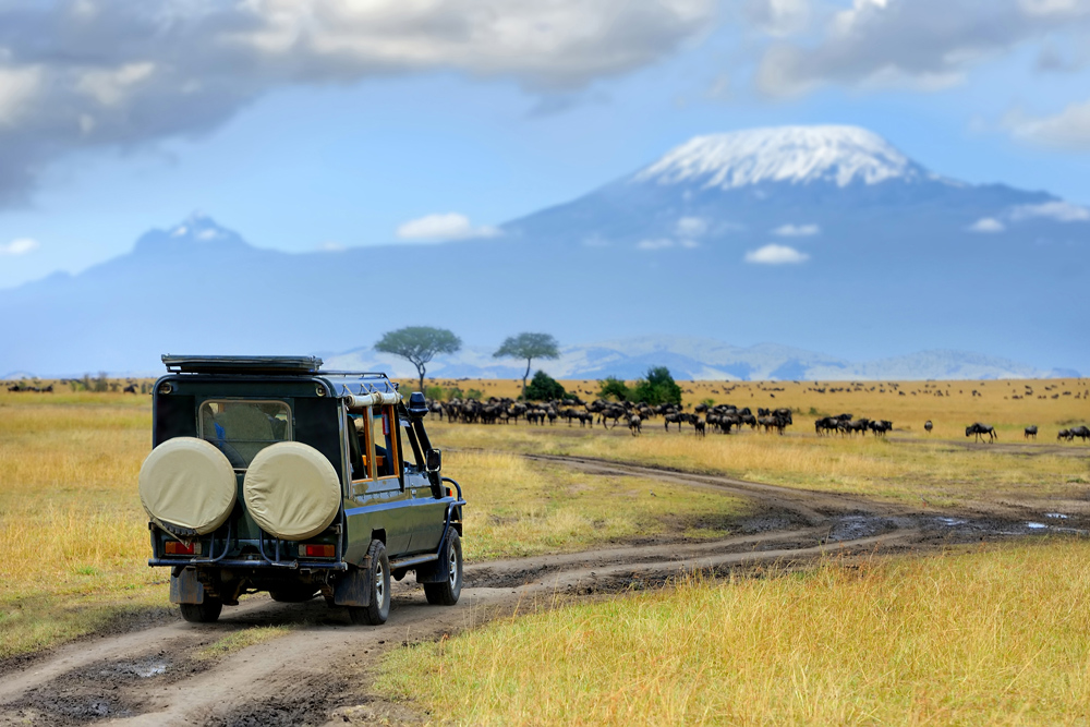 Safari game drive with wildebeest, Masai Mara Reserve in Kenya