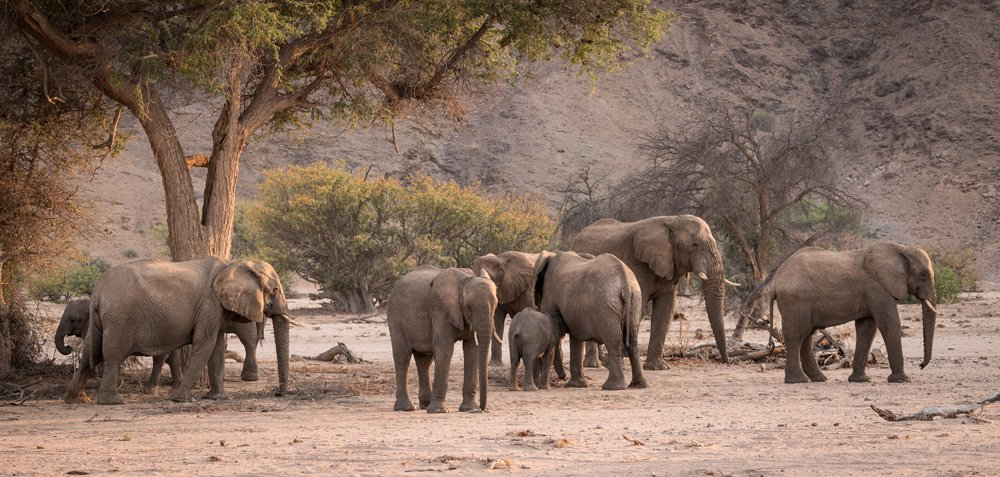 Elephants in Damaraland, Namibia