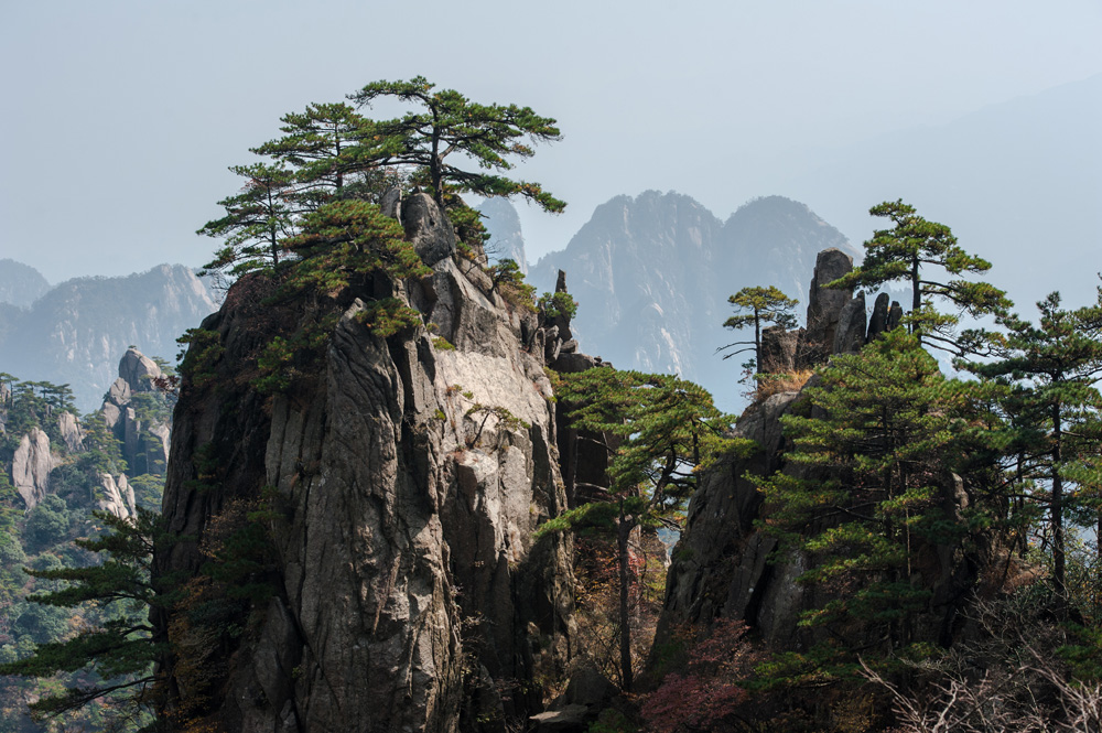 Pine trees on cliff edge of Huangshan Mountain Range, China