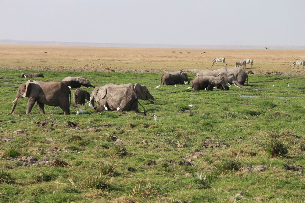 Christian Baines - Elephants cooling off in the marsh, Amboseli, Kenya 202