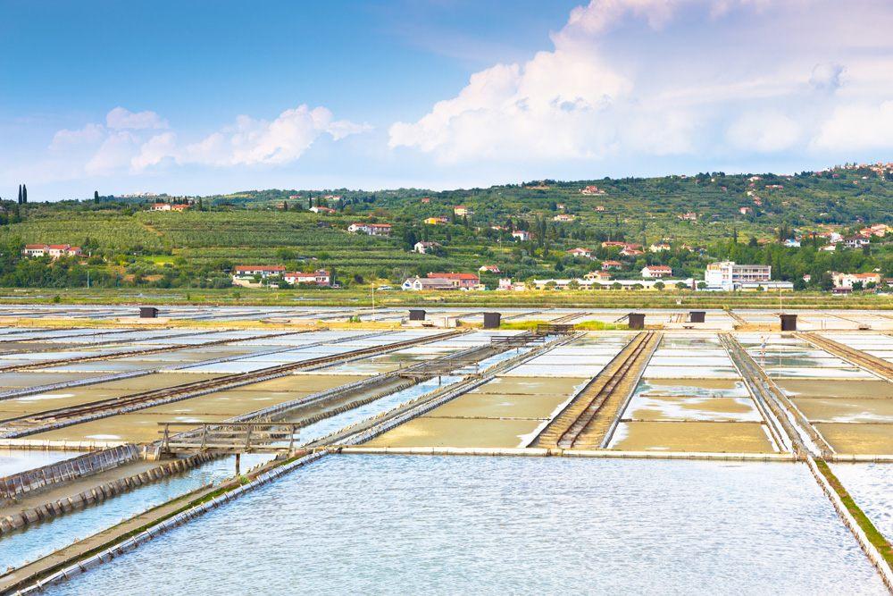 Secovlje Salina Nature Park salt fields, Slovenia