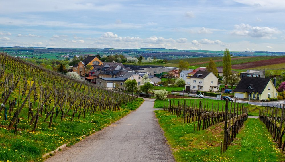 Vineyards near Remich and surrounding small villages, Luxembourg