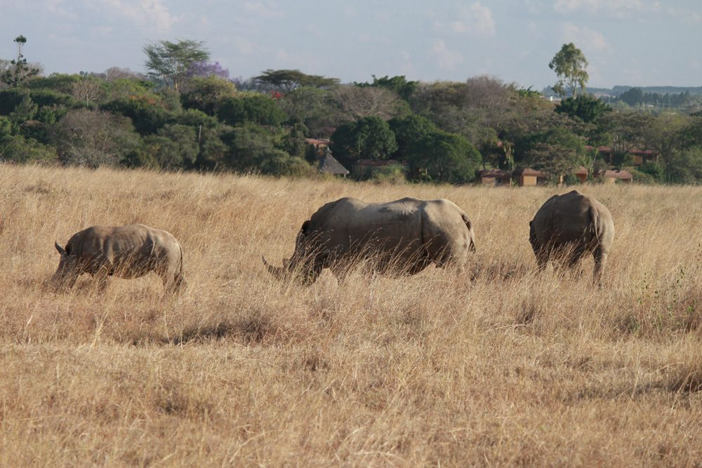 Christian Baines - A family of white rhinos, Nairobi National Park, Kenya 476