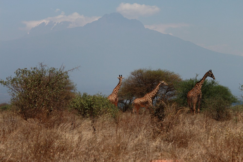 Christian Baines - Kilimanjaro puts Tsavo's tallest residents in perspective, Tsavo, Kenya _5145
