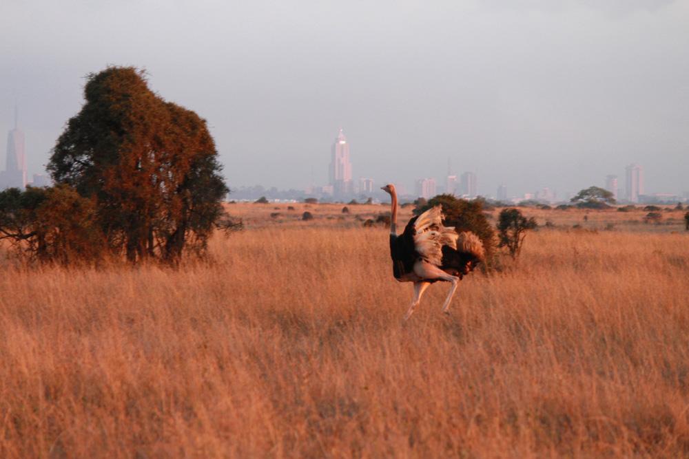 Christian Baines - Morning exercises before the crowds arrive, Nairobi National Park, Kenya 538