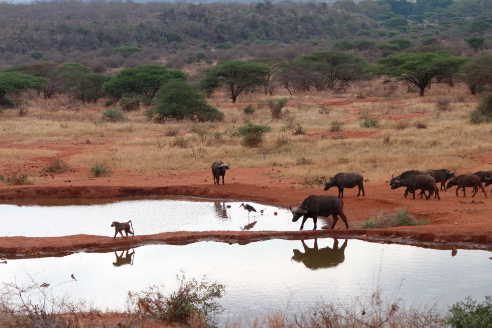 Christian Baines - Prime lunchtime seats overlook the local waterhole, Tsavo, Kenya 393