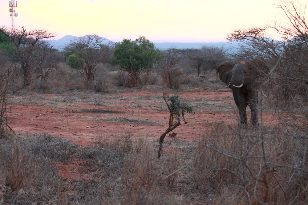 Christian Baines - You kids, get off my lawn, Tsavo, Kenya 432