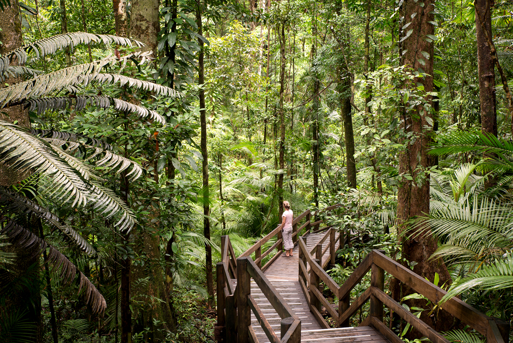Daintree National Park scenery, Queensland, Australia