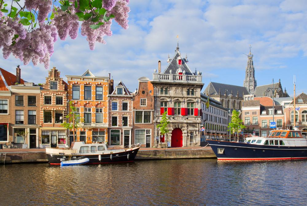 Lilac tree in front of view of canal with historical houses in old Haarlem, Netherlands