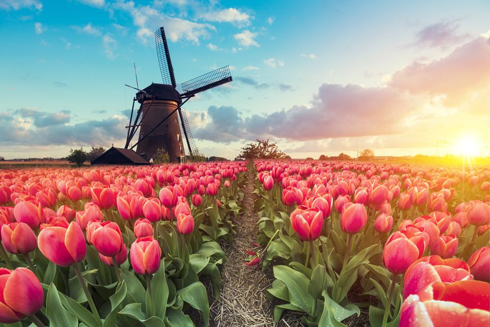 Pathway leading to the windmills of Kinderdijk, near Rotterdam, Netherlands