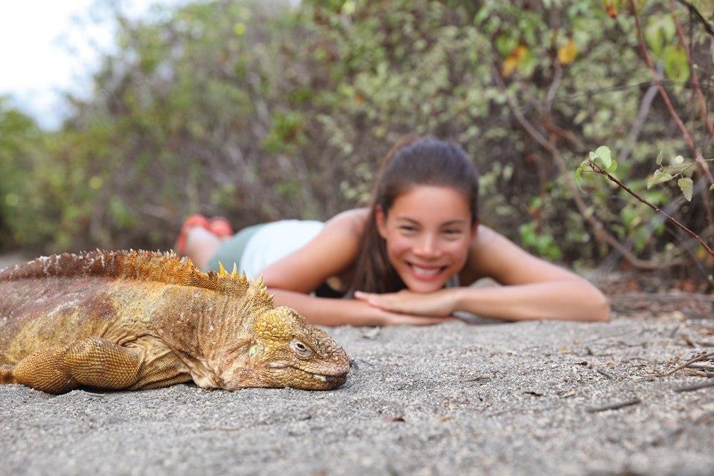 Watching an iguana in Galapagos Islands, Ecuador