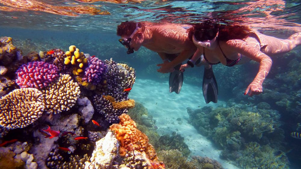 Young couple snorkeling and admiring colourful coral reef, Great Barrier Reef, Queensland, Australia