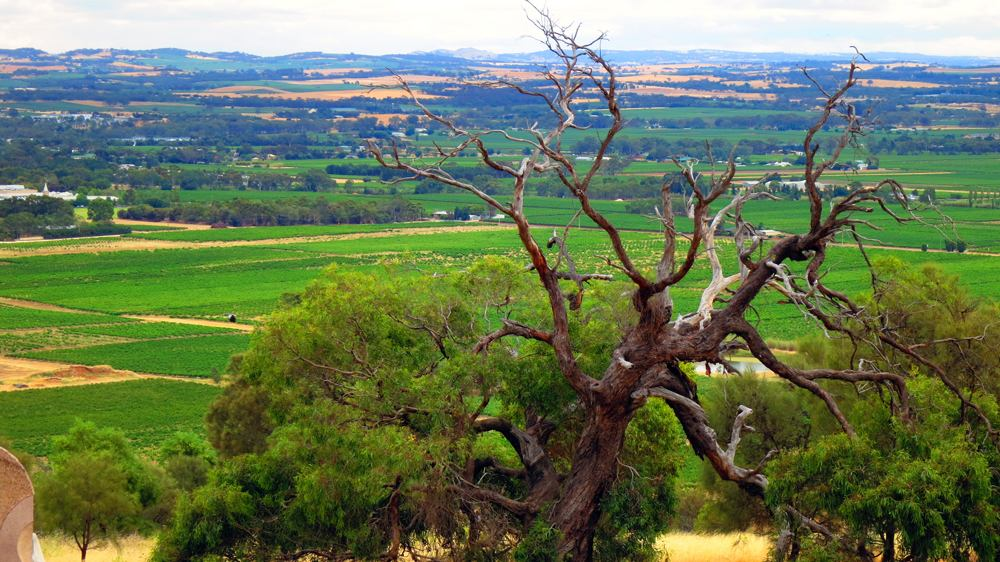 Landscape in Barossa Valley, South Australia, Australia
