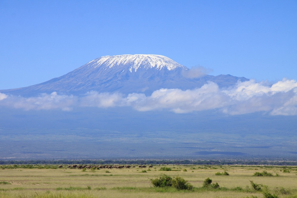 Large herd of elephants move into Amboseli National Park, with Mount Kilimanjaro in background, Kenya