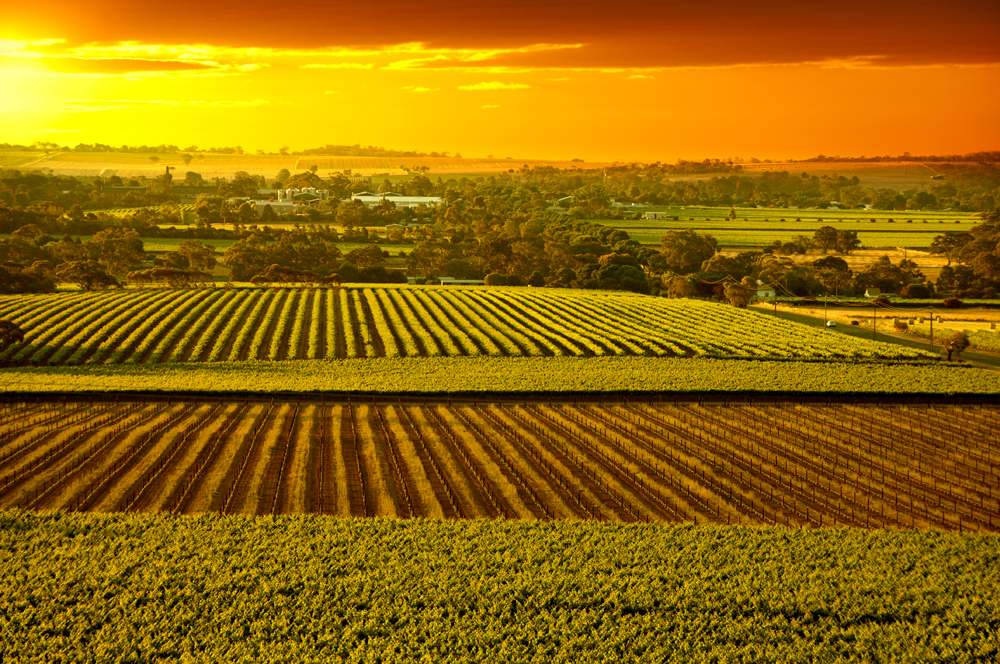 Sunset over Barossa Valley vineyards, South Australia, Australia