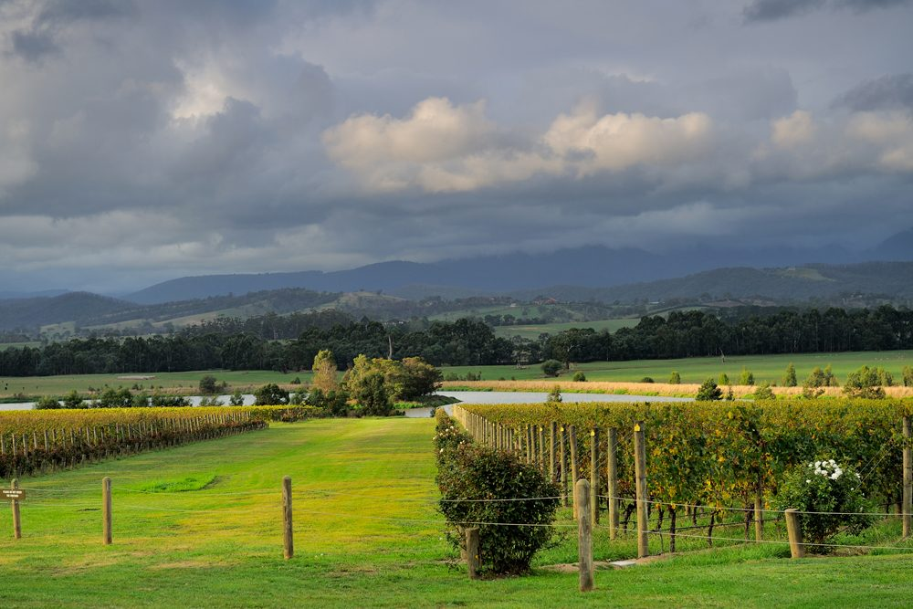 Vineyard along Yarra Valley wine tasting route, Victoria, Australia