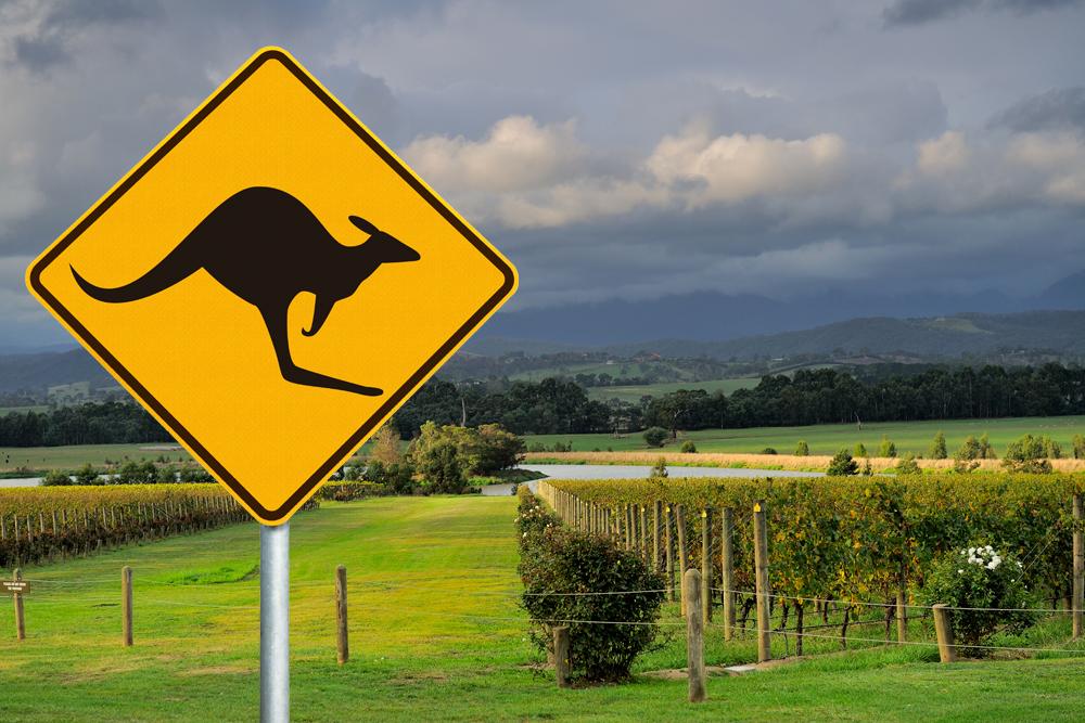Vineyard along Yarra Valley wine tasting route and kangaroo road sign, Victoria, Australia