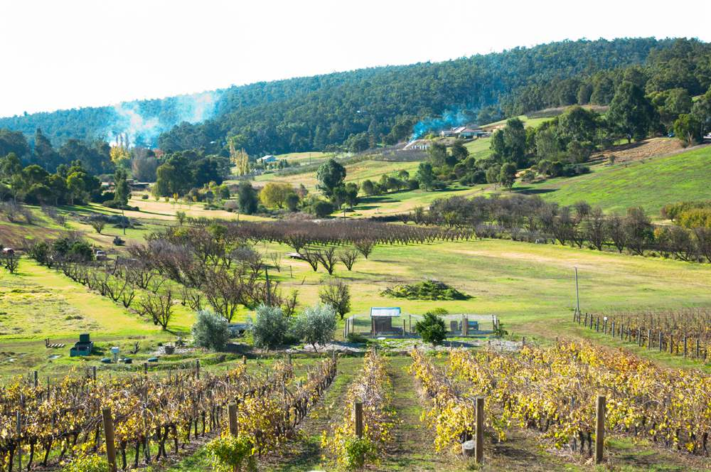 Vineyard in Bickley Valley, Margaret River, Western Australia, Australia