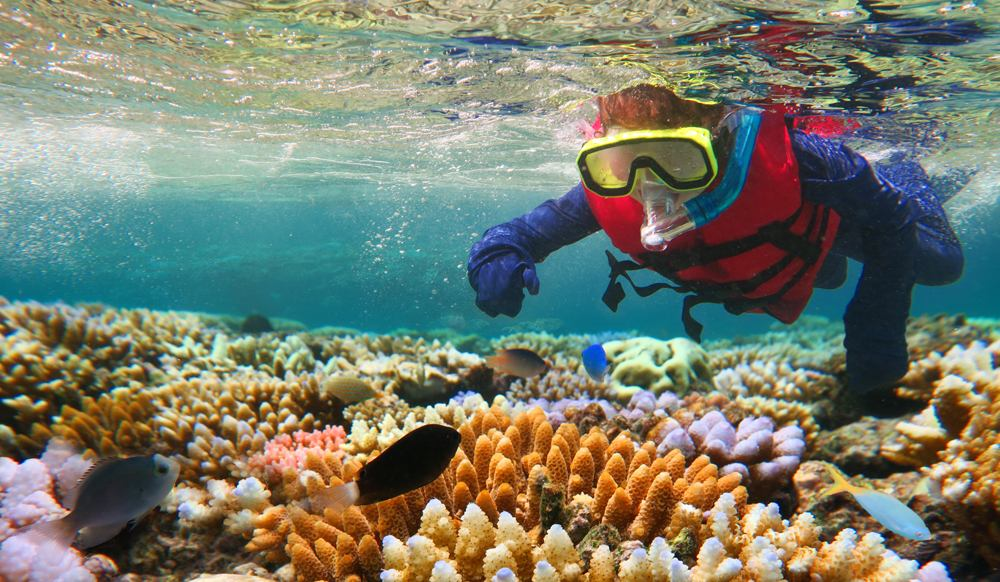 Child snorkeling in the Great Barrier Reef in the tropical north of Queensland, Australia