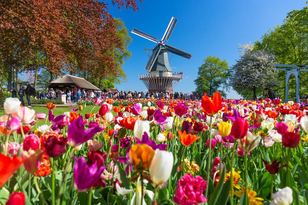 Colourful tulips in Keukenhof Gardens, Lisse, Holland, Netherlands