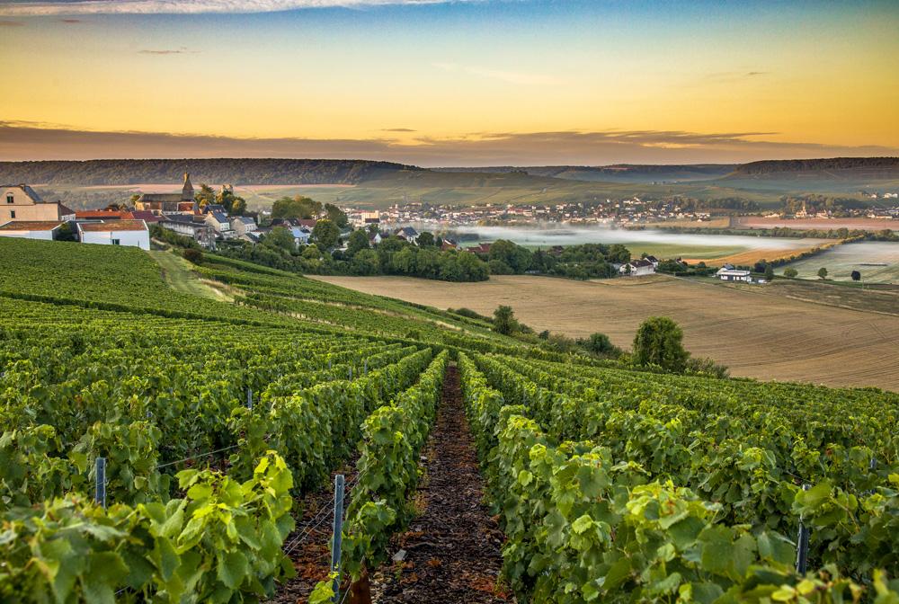 Montagne de Reims Champagne region in France