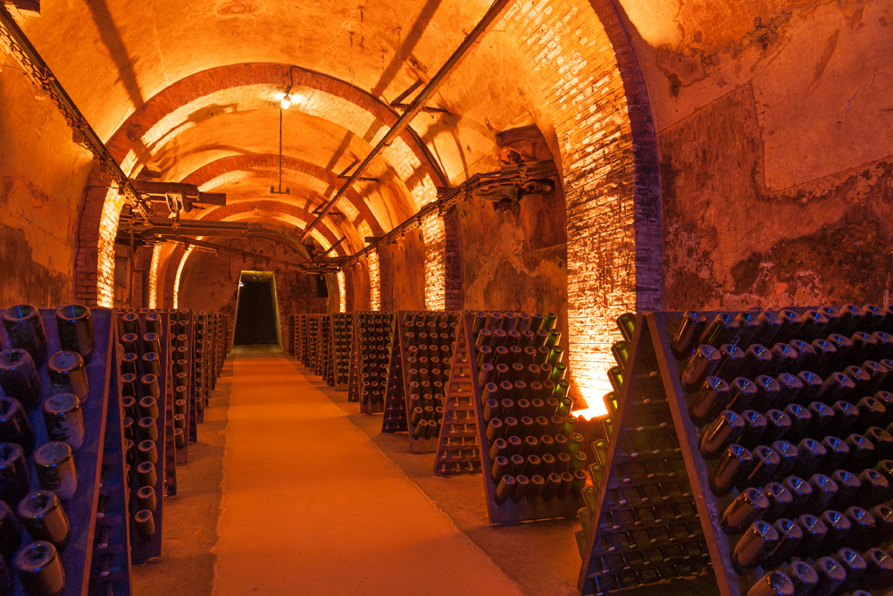 Rows of champagne in bottles during fermentation process in cellar, Reims, France