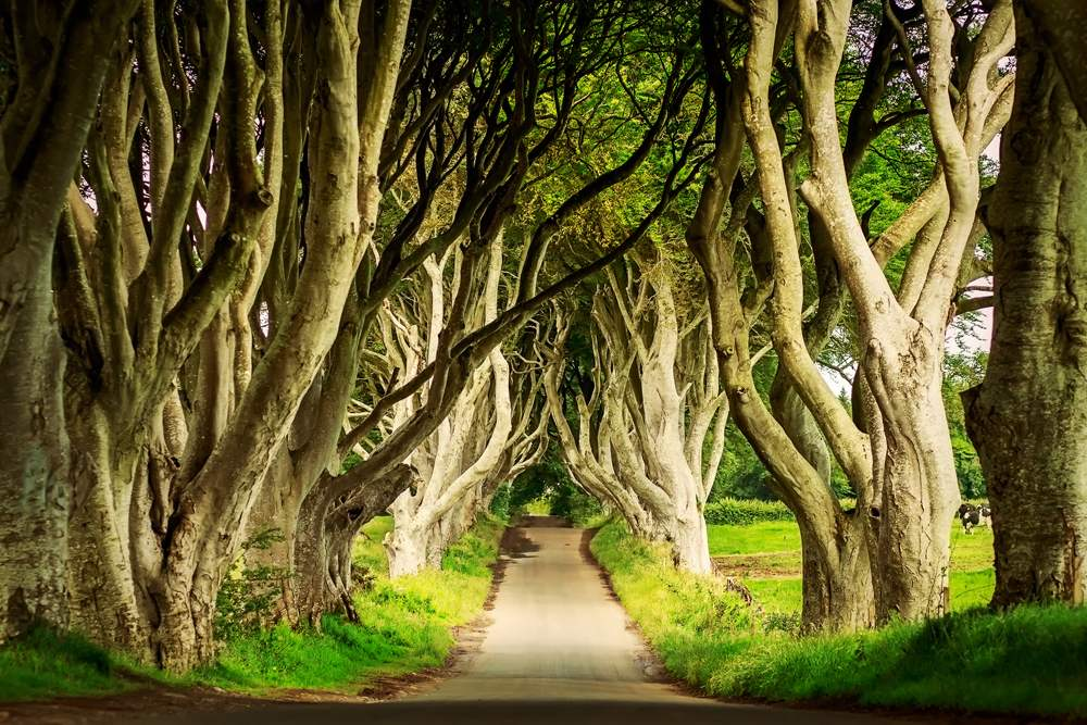 Dark Hedges in Armoy, Northern Ireland