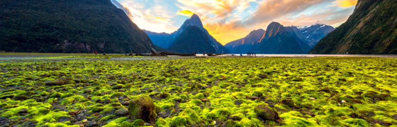 Sunset twilight at Milford Sound, New Zealand