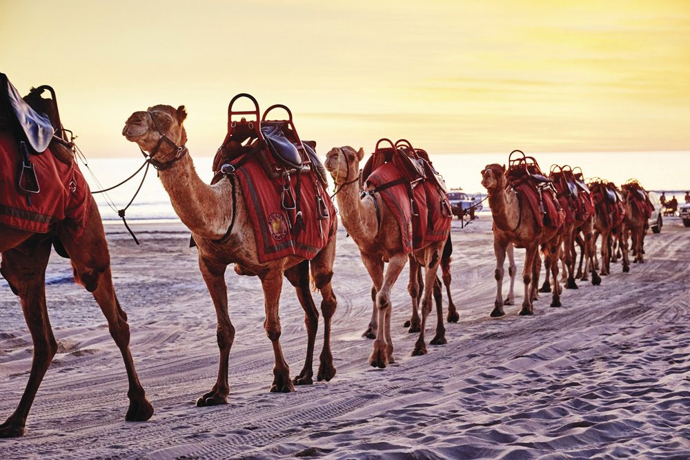 Camels on Cable Beach, Broome, Australia - Tourism Western Australia