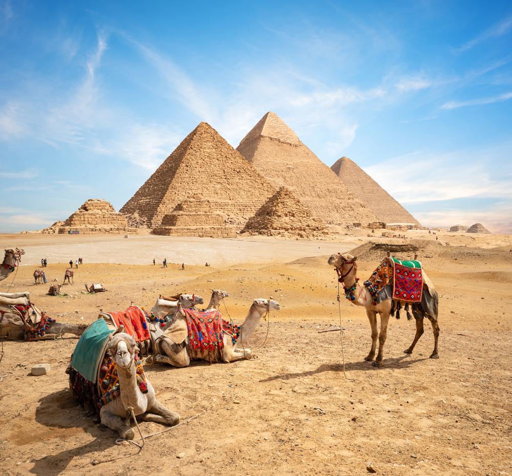 Camels at Pyramids of Giza, Cairo, Egypt full